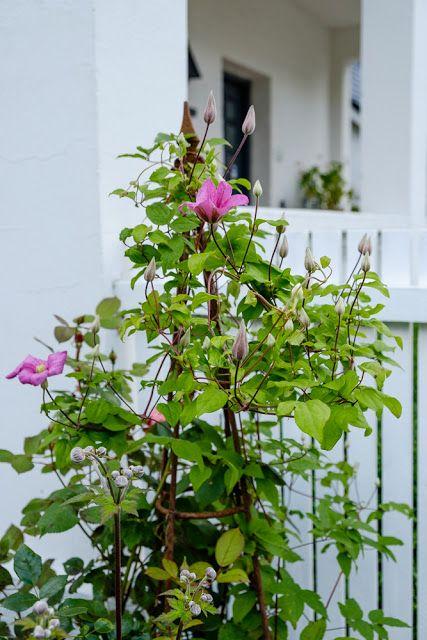 My loving home and garden: Den danske sommer.......