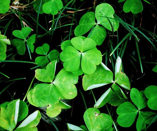 St Patricks Day Jokes and Riddles For Kids