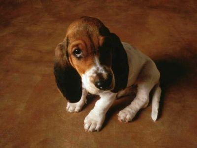 Xixi no tapete, e agora? Limpar xixi e cocô do seu cachorro adulto pode ser mais simples do que você pensa.  Às vezes eles falham, por querer marcar o território ou chamar a atenção ou por algum outro motivo, acabam fazendo as necessidades no lugar errado.O meu cachorro já fez isso, e não foi culpa dele, eu esqueci que ele ...Leia mais em: http://cachorro-meu-pet-amigo.blogspot.com.br/