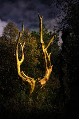 Val sans retour - Sites légendaires de la forêt de Brocéliande