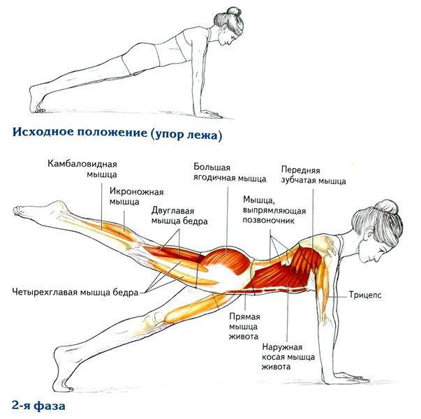 упражнения для спины - Поиск в Google