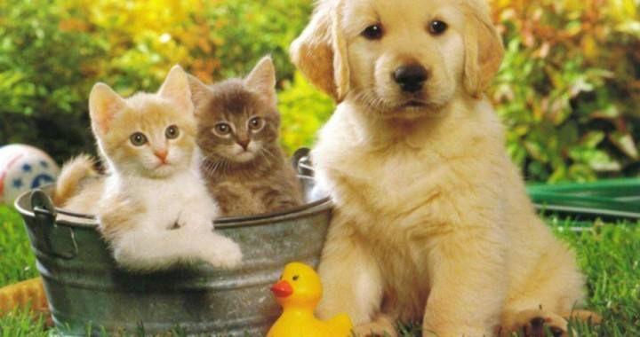 Ufficio Di Collocamento Yahoo : 13 best immagini divertenti e aforismi images on pinterest