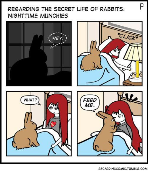 At 5 a.m. every morning she needs a new internal clock. It's more like hold me and pet me.