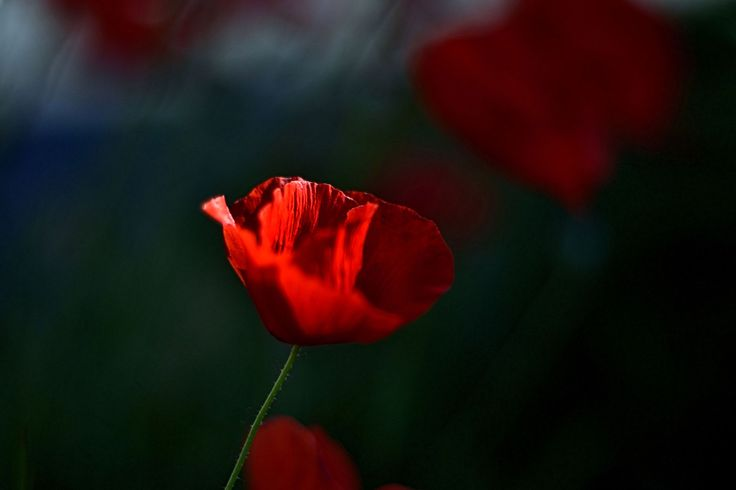 Blood Red by WilWil G on 500px