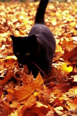 I shall have a black cat & I shall name him October. Or a Calico...