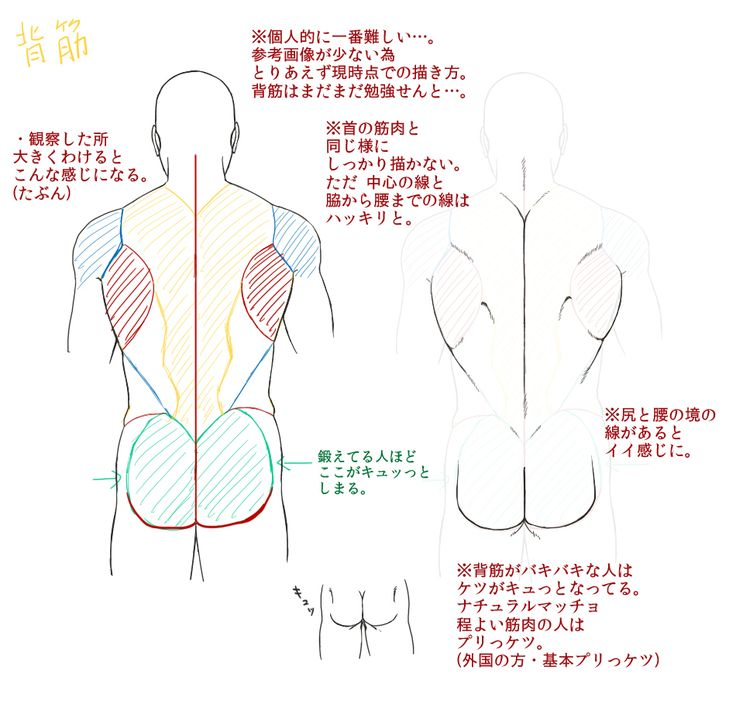 312 best ANATOMY human images on Pinterest | Drawing tutorials ...