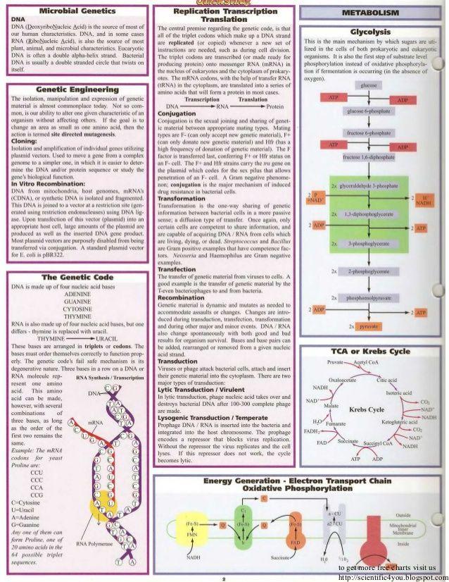 Bar charts quickstudy microbiology
