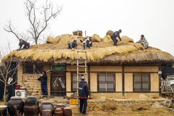 하회마을 초가지붕 이엉교체 작업(사진 안동시농업기술센터 이용덕, 2013. 12. 8.)