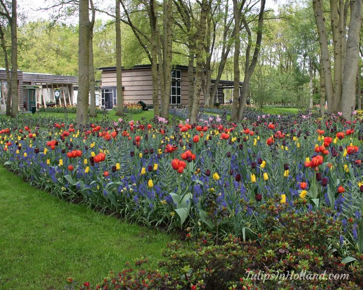 Stunning Travel u Tulips Travel Tulips Twitter Spring GardenTravel PhotosTulipsNetherlandsHollandAmsterdam