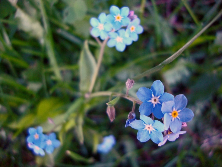 Blue Flowers (Photo by Vikki Watterworth)