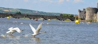 Image result for Limerick city