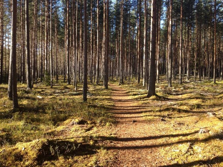 Autum in Norway