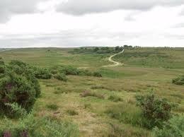New Forest heathlandForests Heathland, Favorite Places