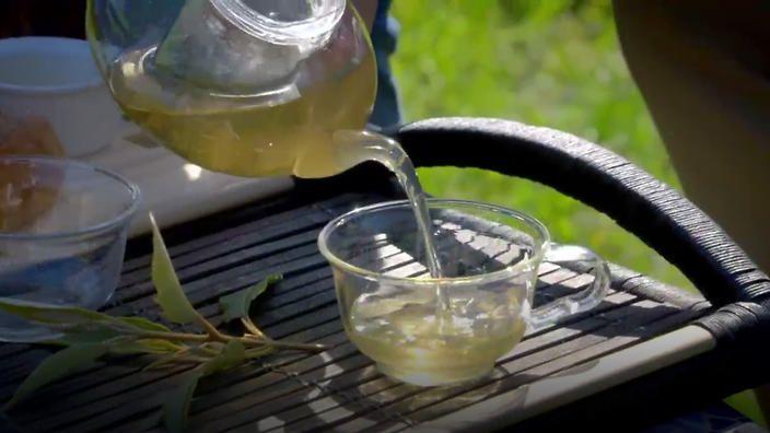 Lemon Myrtle Ice Tea | NITV