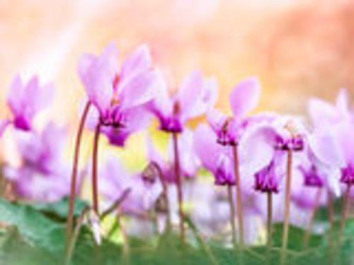 #Moda: #Il significato dei fiori da  (link: http://ift.tt/1VyqirC )