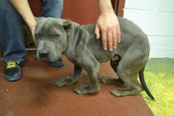 Justitie voor Landis, hond gevouwen in helft in kleine behuizing door meedogenloze eigenaar!|YouSignAnimals.org