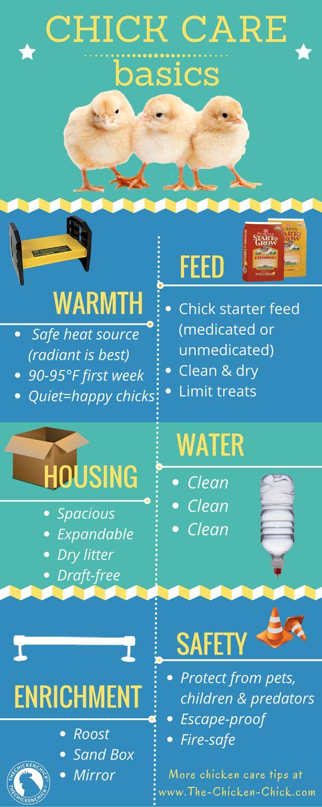 Chick Care Basics www.The-Chicken-Chick.com