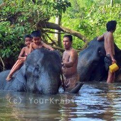 Elephant trekking in Krabi