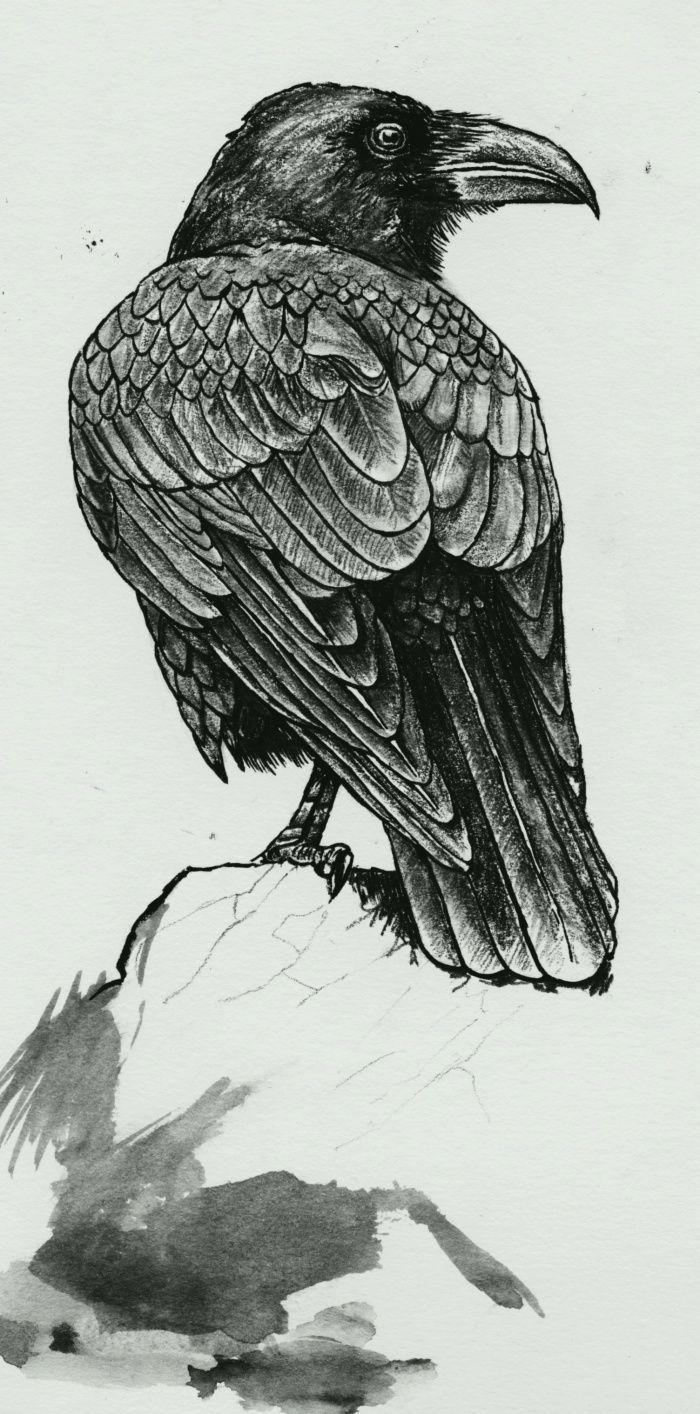 Les 25 meilleures id es de la cat gorie crow feather sur pinterest plume signification plumes - Signification des plumes d oiseaux ...