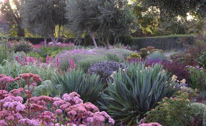 No maintenance perennial garden.