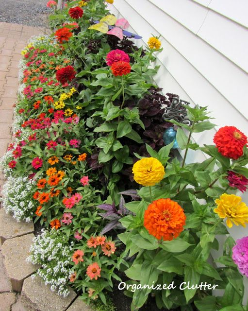 Organized Clutter: Yard of Flowers: Garden Tour 2013 - Zinnia bed
