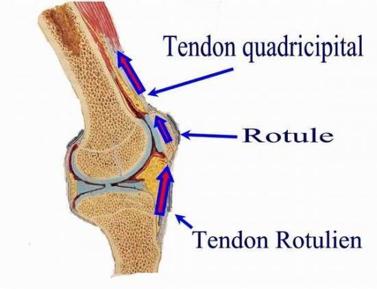 Prothèse totale du genou - exercices pour les étudiants infirmiers(re)