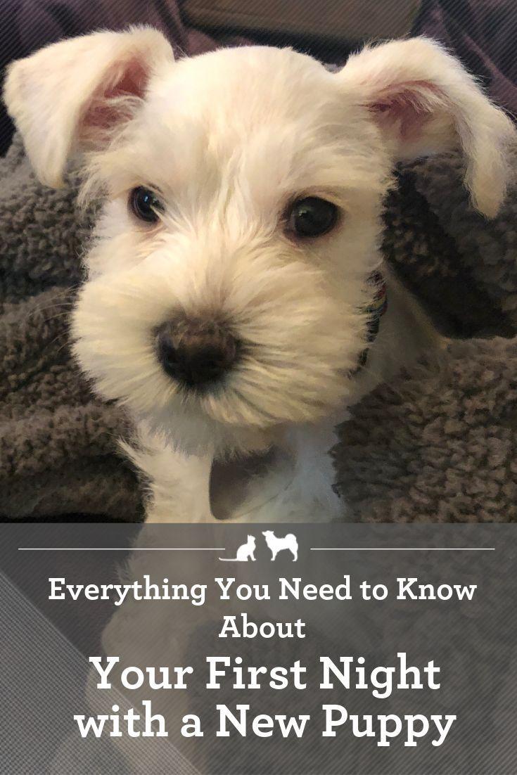 New Puppy Checklist First Night With Puppy New Puppy Checklist