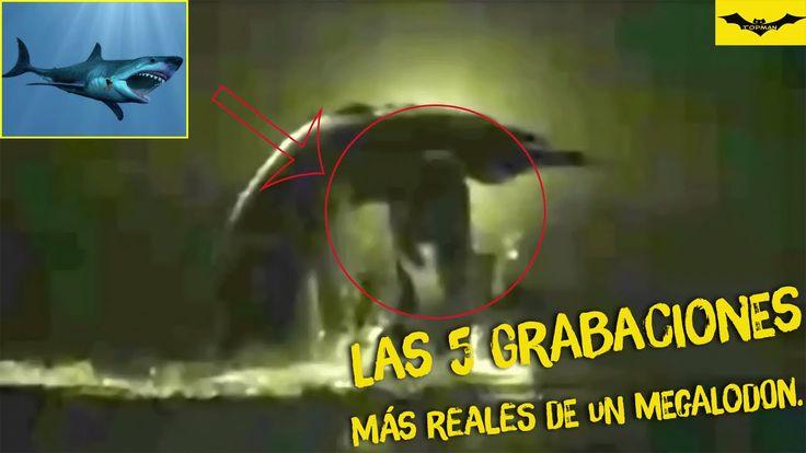 Megalodon real captado en video. Los 5 más reales.