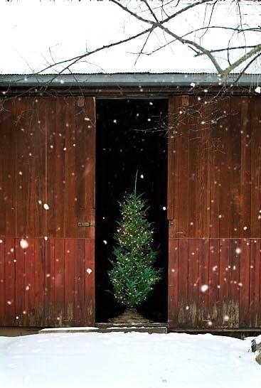 Barn Christmas tree.