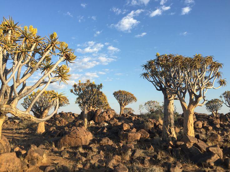 Kokerboom forest, Keetmanshoop, Namibia