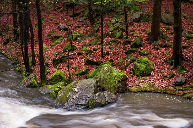 Wild Stream In Spring Forest by Jenny Rainbow