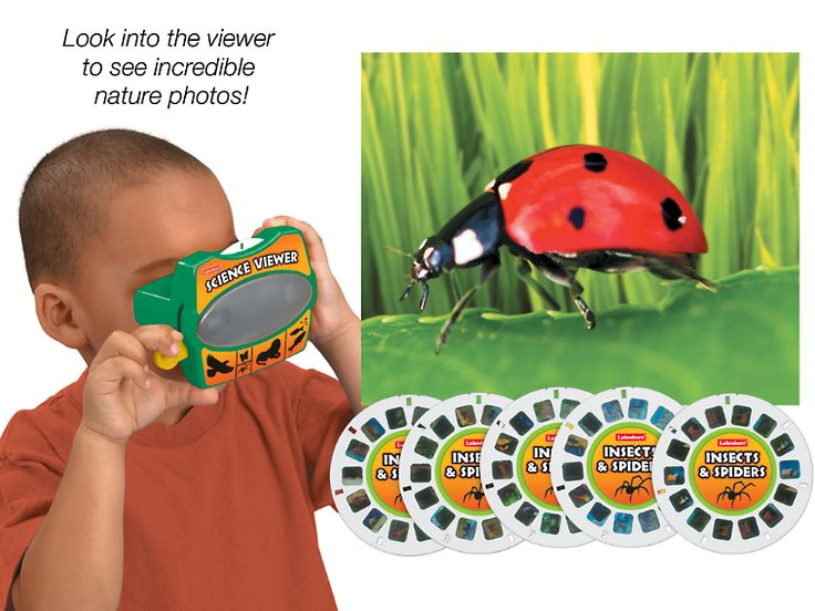 Insects & Spiders Science Viewer: