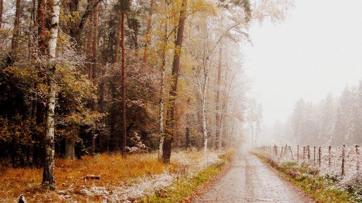 #autumn #forest #colors #mood