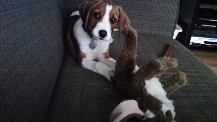 hunter as a puppy
