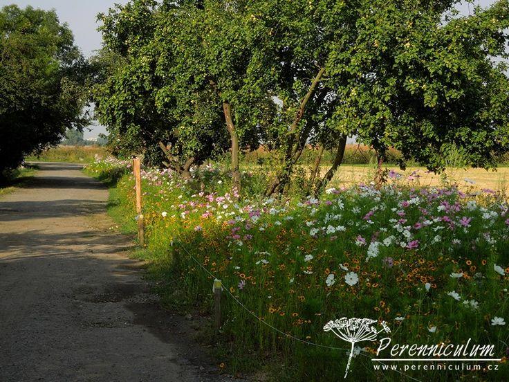 Prašnou cestu k zámeckému zahradnictví Ctěnice lemovala v roce 2013 letničková louka.