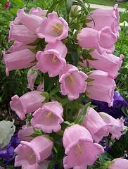 Flower Garden Ideas Wisconsin 10 best wisconsin garden plants images on pinterest   garden