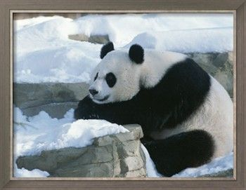 424 best Pandas images on Pinterest | Adorable animals ... Panda Cubs Playing In Snow