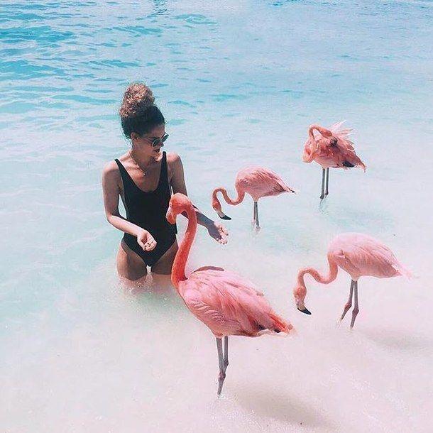 aruba, beach, flamingo, pink, summer