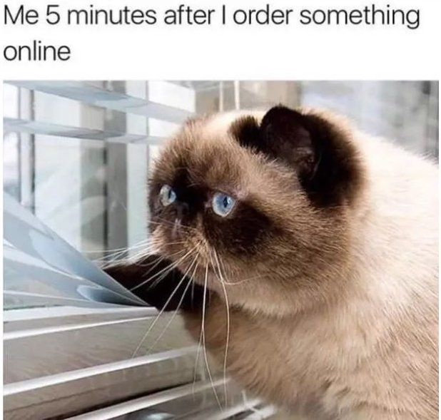 20+ Hilarious Memes Every Cat Owner Will Understand – Megan Ossinger