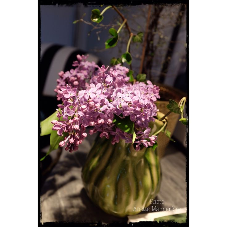 Lilacs from garden