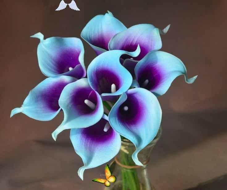 Blue Purple Picasso Calla Lily 36stems For Real Touch Bridal Wedding Bouquets Blue Purple Picas In 2020 Blaue Hochzeitsstrausse Blaue Hochzeitsblumen Calla Lily Tattoos