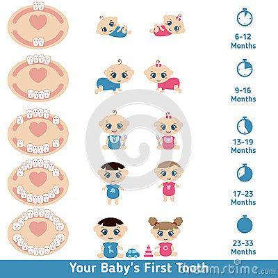 Best 25+ Baby teething chart ideas on Pinterest | Teething ...