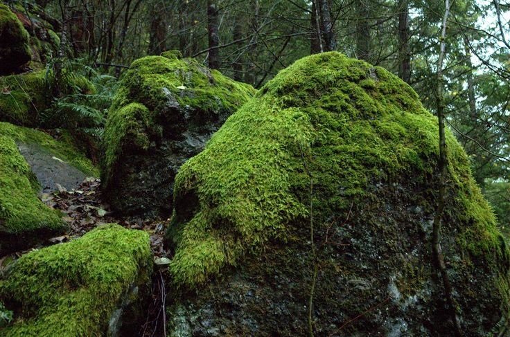 17 best images about trees rocks and moss on pinterest for 11801 pierce st 2nd floor riverside ca 92505