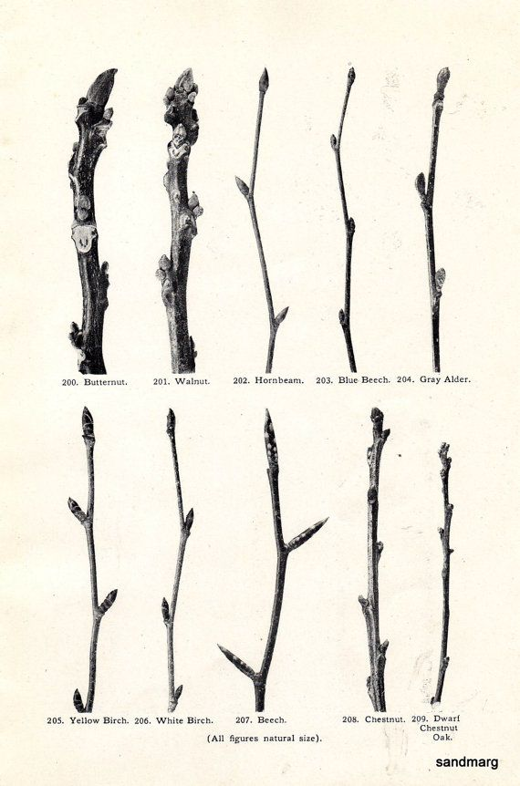 20 A Branch With Name Tattoos Drawings Ideas And Designs