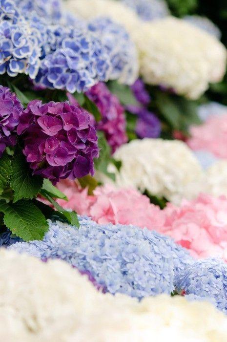 Oh, do I love hydrangeas. In my garden, in a vase - on my happy wall!