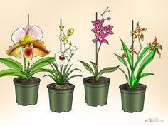 Imagem intitulada Care for Orchids Step 4Bullet1