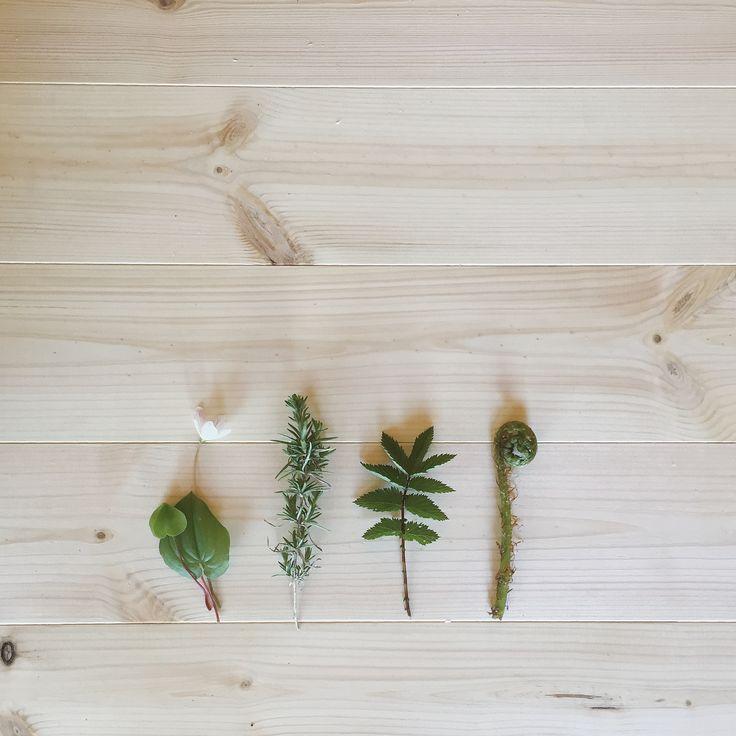 New pinewood floor