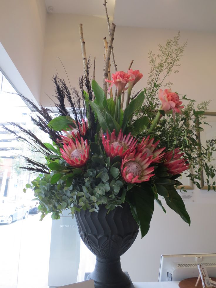 King of all the Protea