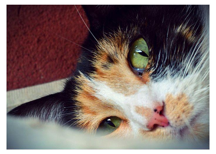 Ojos de mi linda gatita