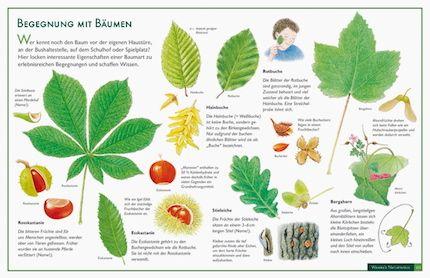 Lernposter vom Natur-Verlag Wawra